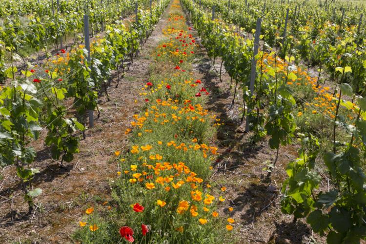 Biodiversité fleurs